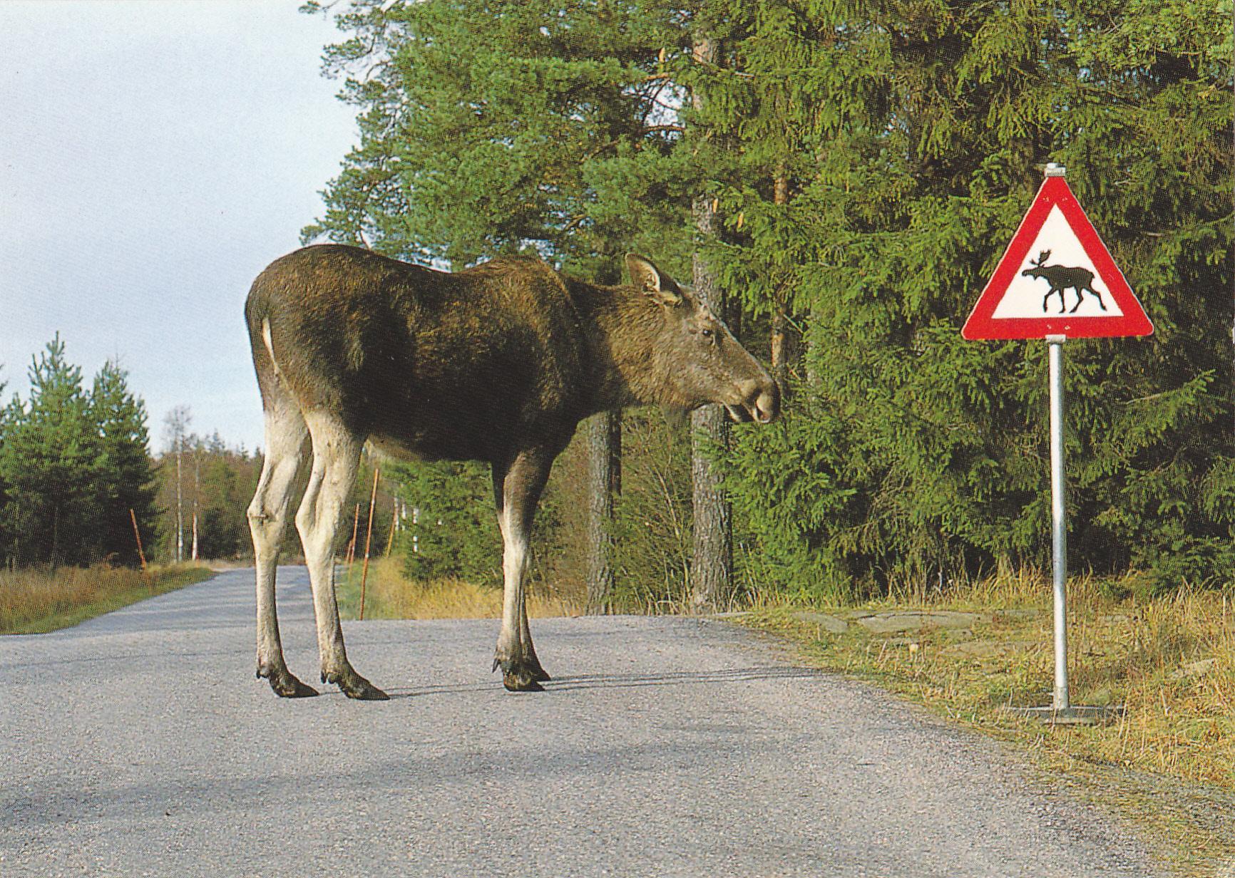 rail road ties ikea and moose oddvin vedo